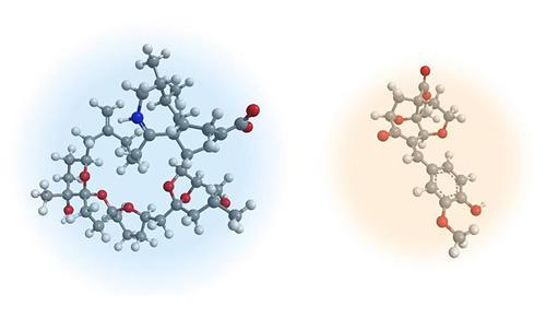 図1 これまでに全合成を達成した化合物の例
